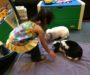 SlytherBun with Tessie and Oreo